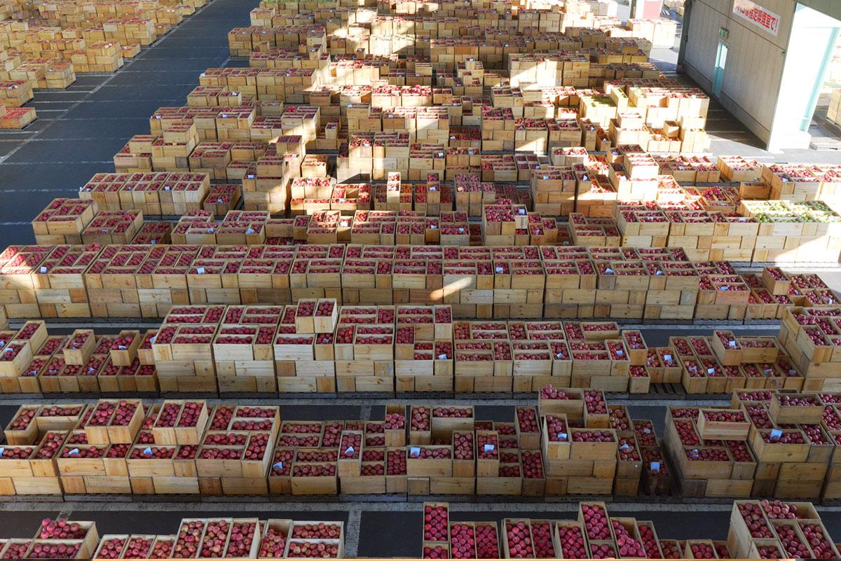 市場に並ぶ大量のリンゴ